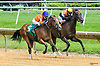 Into Bluegrass winning at Delaware Park on 6/2417
