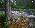 Amnicon Falls State Park, WI:  Amnicon River flowing through a mixed pine-hardwood forest