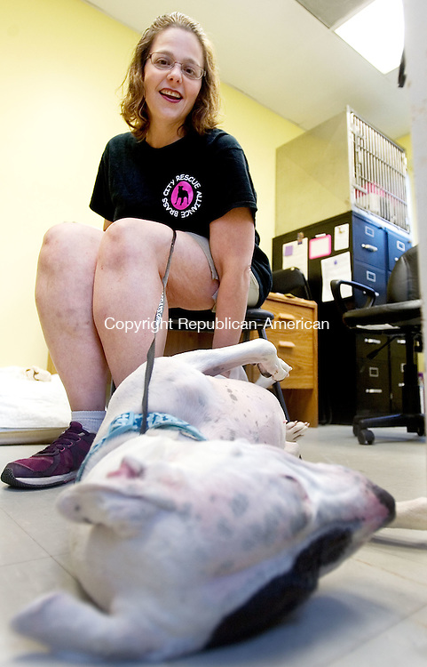 MIDDLEBURY CT. 11 August 2015-081115SV08-Jennifer Humphrey, CEO and Founder of Brass City Rescue Alliance plays with a rescued dog at the shelter in Middlebury Tuesday.  Brass City Rescue Alliance is leasing space at the town animal shelter. <br /> Steven Valenti Republican-American