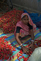 Chilis at the Varanasi open Market