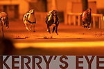 WINNING FORM: Lassa Experience just pips Get Away Friday at the post to win the Moormac Development 550 race at the Kingdom Greyhound Stadium on Friday night..