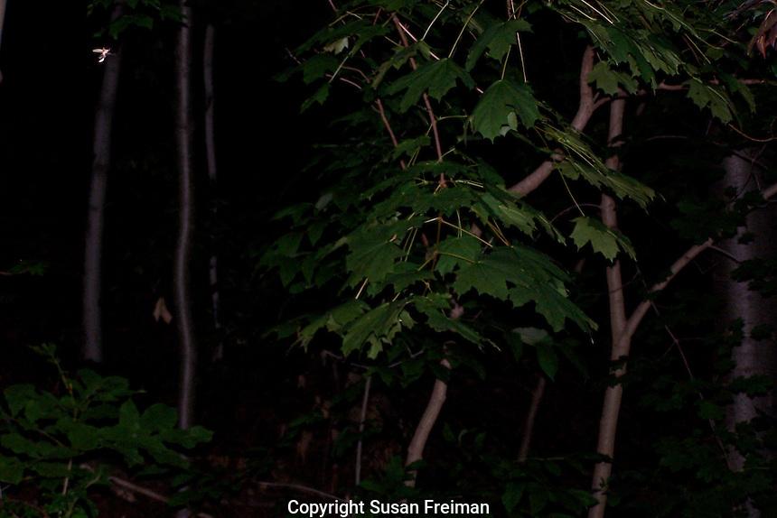 Firefly on a summer night