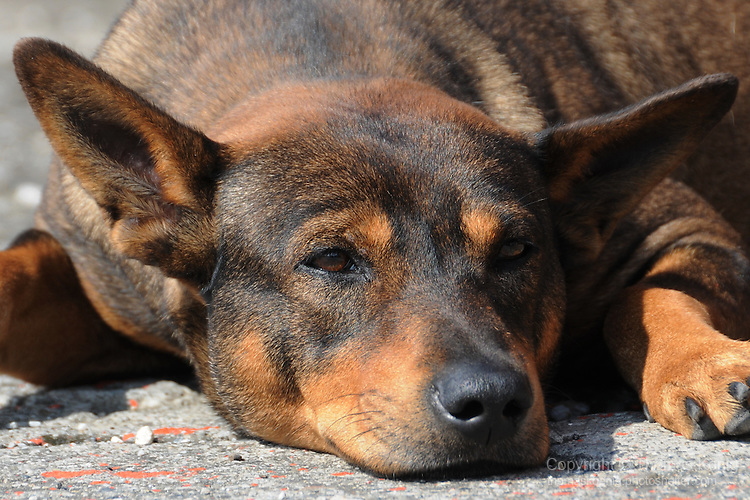 Nan Liao, Green Island - A dog in the afternoon sun on a street.