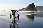 Cape Sebastian State Park Southern Oregon Coast Highway 101 sunset low tide with crab pod washed ashore reflected on beach with rock formations Oregon State USA.