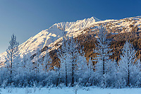 Winter landscape of hoarfrost covered Willow Trees with the snow-covered Kenai Mountains in the background  in Southcentral, Alaska.  <br /> <br /> <br /> <br /> Photo by Jeff Schultz/SchultzPhoto.com  (C) 2017  ALL RIGHTS RESVERVED