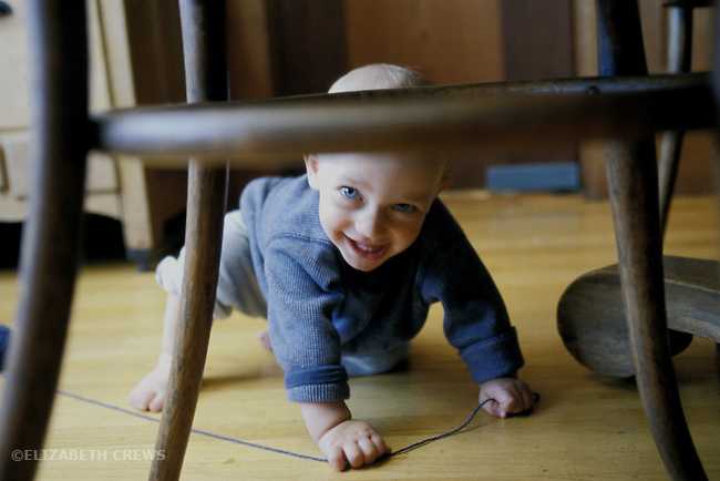 Berkeley, CA  Baby boy eight months old playing hide-and-seek under diningroom furniture at home  MR