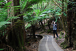 A visitor photographs the fern forest in Mt Field National Park, Tasmania, AUSTRALIA
