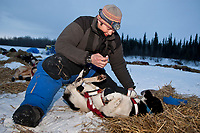 Robert Nelson's dog *Patches* helps Robert put booties on by lying on his back at the Nikolai checkpoint during Iditarod 2009