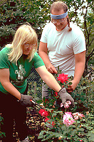 Gardeners age 39 cultivating prize winning roses.  Edina  Minnesota USA