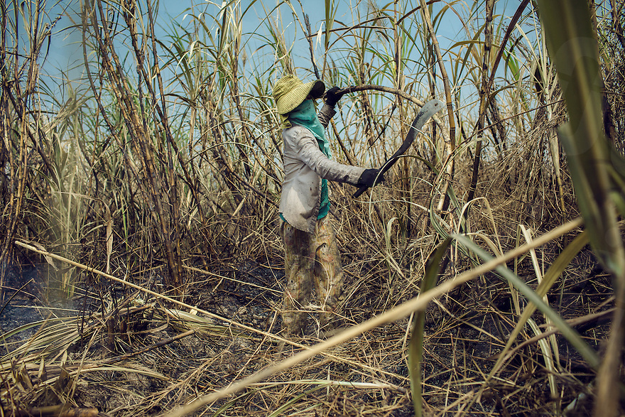 A woman cuts sugar cane. Sugar plantation of Srei Ambel, Koh Kong, Cambodia. 16 Jan. 2013 © Thomas Cristofoletti / Ruom
