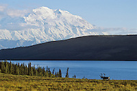 Caribou bull, Wonder Lake and Mt. McKinley, Denali N.P., Alaska