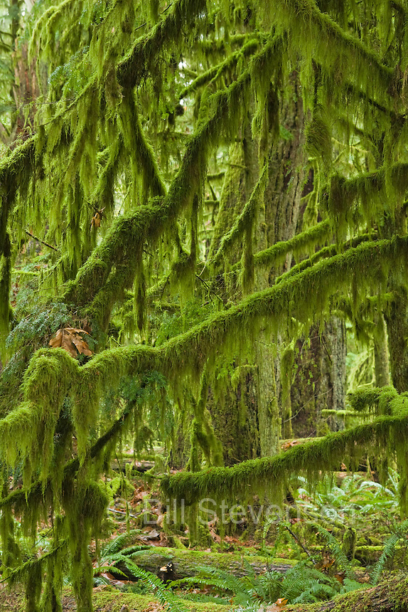 A photo of a rainforest on Vancouver Island in British Columbia in Canada