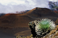 Sliversword shares the crater with clouds and cinder cones in HALEAKALA NATIONAL PARK on Maui in Hawaii