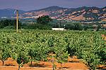Redwood Valley, near Fife Vineyards, near Ukiah, Mendocino County, California