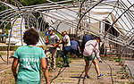 SHARON , CT-080320JS10—Volunteers and staff help to clean up Paley's Farm Market in Sharon on Monday after a possible tornado caused damage at the farm on Sunday afternoon.<br /> Jim Shannon Republican-American