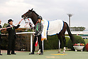 Horse Racing : Mainichi Broadcast. Swan Stakes 2016