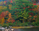 Acadia National Park, ME<br /> A white oak's canopy avainst the fall colors of a mixed hardwood forest at Bubble Pond , early fall