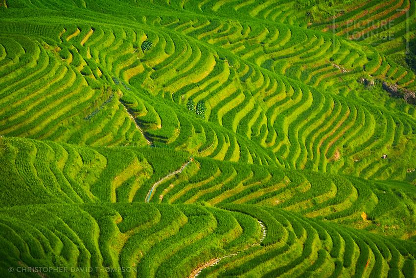 Longji Terrace, Longsheng, Peoples Republic of China