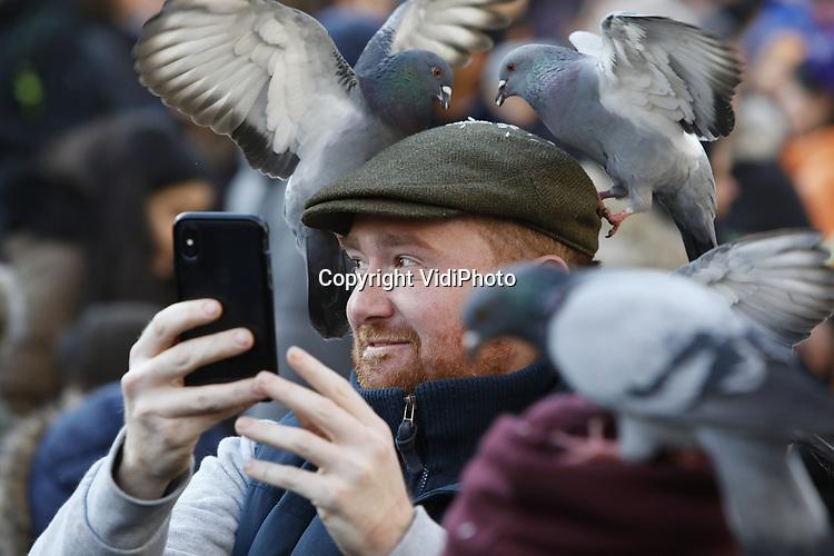 Foto: VidiPhoto<br /> <br /> AMSTERDAM – Alle duiven op de Dam zijn dol op toeristen en andersom en dat zal wel nooit veranderen. Dankzij enkele 'zzp'ers' met strooigoed, worden de handen -en vaak hoofden- van Dambezoekers dagelijks rijkelijk voorzien van duivenvoer. Vervolgens moet er afgerekend worden, want de 'zwervende ondernemers' staan daar niet uit charitatieve overwegingen. De uitzonderlijk populaire toeristische attractie echter is illegaal, maar meestal wordt een oogje dicht geknepen. Amsterdam doen zijn uiterste best om de overlast van de 'vliegende ratten' tot een minimum te beperken. Duiven produceren jaarlijks 12 kilo poep waardoor afvoeren en goten verstopt raken en zo voor miljoenen euro's aan schade veroorzaken. Dat nog los van de vervuiling op zich en de schade die de mest veroorzaakt aan de monumentale panden.