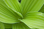 Vibrant green plant.