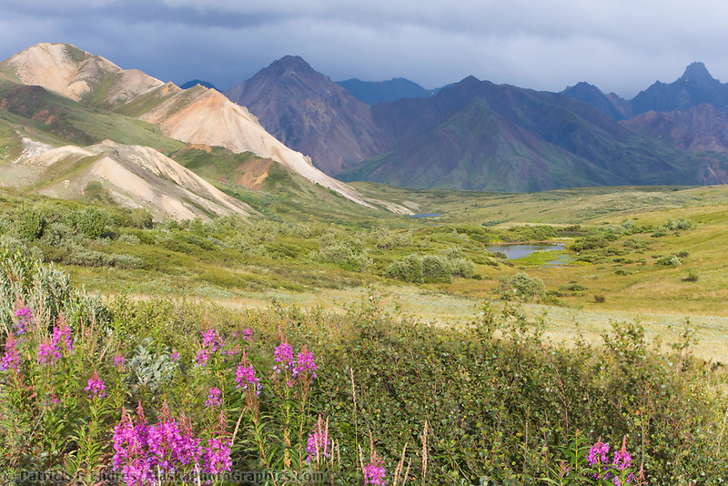Mountain landscape, Alaska Range, sable pass region, Denali National Park, Alaska
