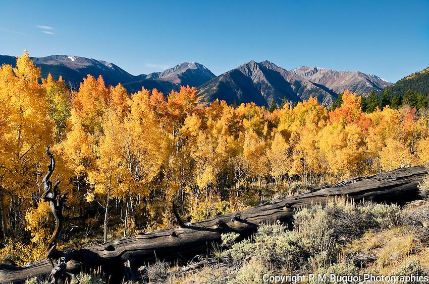 Fall Aspen Color near Twin Lakes, Colorado