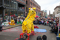 Lion Dance, Chinese New Year 2019, Wing Luke Museum, Chinatown, Seattle, WA, USA.