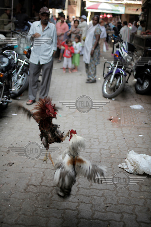 A man watches a cock fight in a back alley in Mumbai.