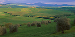 Tuscany, Italy, <br /> A sloping hillside of olive groves with the green rolling hills of Val d'Orcia and Mount Amiata in the distance