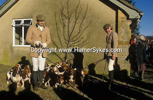 Hunting hare. Four Shires Bassett Hounds Oxfordshire England. Hounting with Hounds.