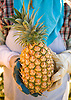 A freshly harvested Maui Gold pineapple. Photo by Kevin J. Miyazaki/Redux