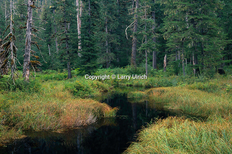 Old growth forest,  Ohmer Creek<br /> Mitkof Island<br /> Tongass National Forest<br /> Alaska