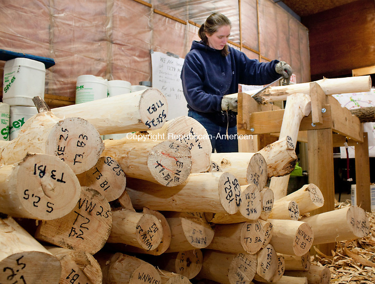 MIDDLEBURY CT- FEBRUARY 21 2013 -022113DA04- Helene Hochholzer of DEEP Division of Forestry peels back bolts of ash provided by private land owners and municipalities looking for the Emerald Ash Borer at the Middlebury town garage on Thursday. The state is trying to slow the spread of the bug, a tiny green beetle that kills ash trees..Darlene Douty Republican American