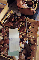 Europe/France/Limousin/19/Corrèze/Vallée de la Dordogne/Marcillac la Croisille: Achat des champignons par le transitaire