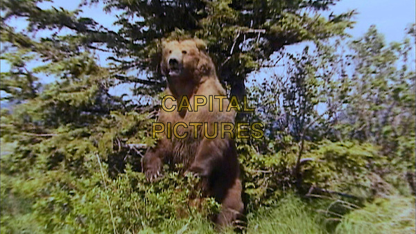 Grizzly Man (Doc. 2005).*Editorial Use Only*.www.capitalpictures.com.sales@capitalpictures.com.Supplied by Capital Pictures.