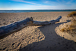Hammonasset Beach State Park, Madison, CT. Log on beach.