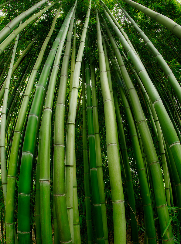 Close up of bamboo. Hughes Water Garden, Oregon