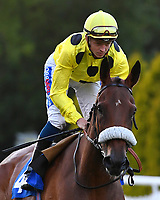 Brief Visit ridden by David Probert goes down to the start during Ladies Evening Racing at Salisbury Racecourse on 15th July 2017
