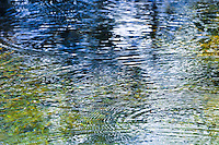 Ripples created by raindrops falling from trees on to a pond