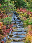 Mount Baker-Snoqualmie National Forest, Washington<br /> Fall colors and stone stairs on a trail at Heather Meadows