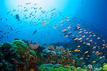 Reefs at Verde island