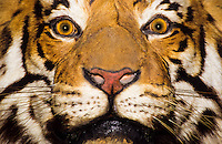 A close up portrait of a bengal tiger