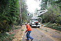 Nov 2, 2013:  Potelco lineman Chad Lohrey gathers #4 Copper wire that was knocked down when a tree was blown down along Tracyton NW Blvd and Stampede NW Blvd.