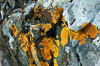 Rocks along the Lake Superior shoreline covered in orange lichen.