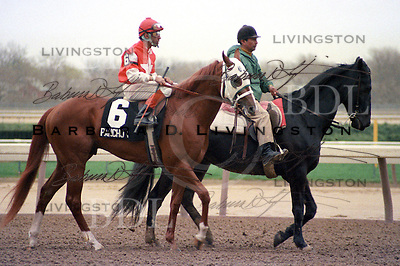 Pancho Villa (Secretariat), Angel Cordero up, at Aqueduct 1985.  Secretariat's crack sprinter for trainer Wayne Lukas.