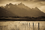 A fenceline stretches into a field of grass at the Walton Ranch in Jackson Hole, Wyoming.