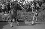 Appleby in Westmorland traditional annual gypsy Horse Fair Cumbria. 1981