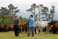 Rapa das Bestas celebration for 4 days in which when children became adults convert to aloitadores and deworm the wild horses to improve horse life. In Saducedo, North of Spain on July 9, 2018.