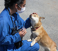 Workers from ARK rescue dogs abandoned near the Fukushima Daiichi Power Plant, Fukushima Prefecture, Japan.  Since the declaration of the 20 kilometer exclusion zone around the leaking nuclear power plant  thousands pets have been deserted and lost their home when their owners were forced live in evacuation shelters...PHOTO BY SINOPIX