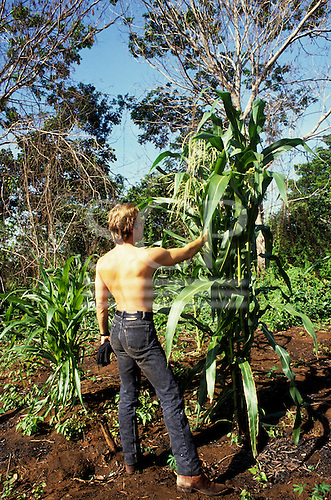 Xingu Reserve, Brazil. Sting looking at a maize crop; Txicao Indian village, Xingu Indigenous area, Nov 1990.